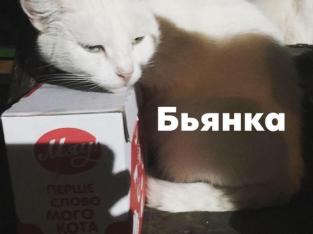 Белоснежная кошка — отдам даром