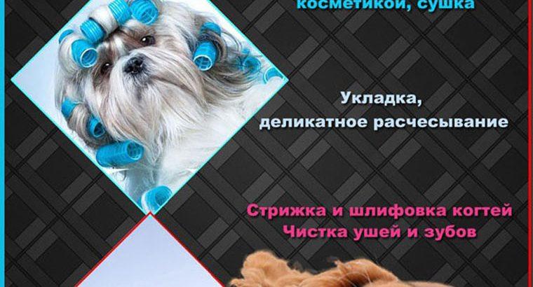 Грумер , стрижка собак , Песочин , Харьков
